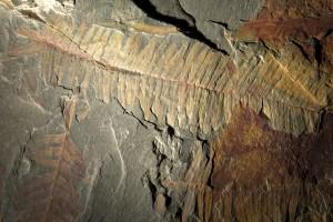 Fossilien Mineralien und Gesteine Dauerausstellung Primo Guido Omesti von Montegrotto Terme