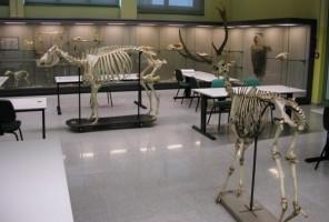 Museo Didattico di Medicina Veterinaria a Legnaro