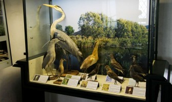 Museo Naturalistico dei Colli Euganei a Baone