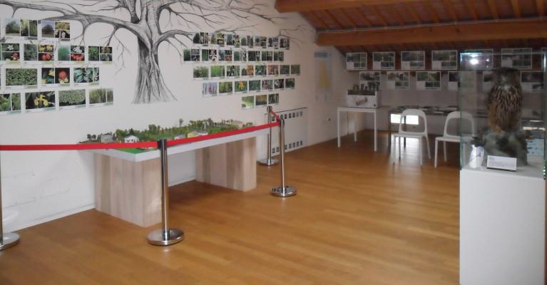 Museo delle Risorgive a San Pietro in Gu