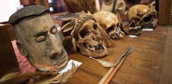 Museo di Antropologia a Padova