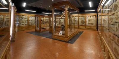 Museo di Geologia e Paleontologia a Padova