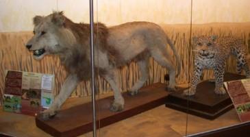 Museo di Zoologia a Padova