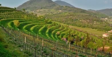 Muvi - Museo del Vino Colli Euganei a Vo' Euganeo