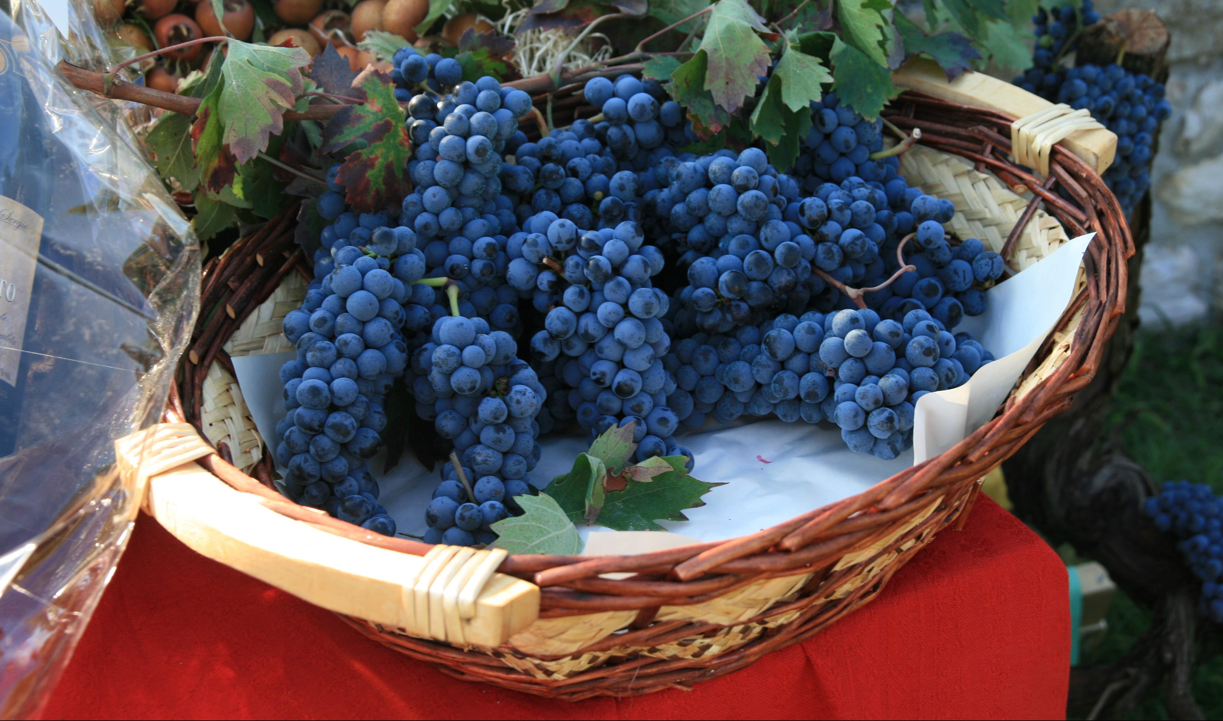 Cantine aperte a san martino sui colli euganei thermae - Piscine termali abano aperte al pubblico ...