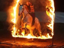 Festa del Cavallo a Legnaro