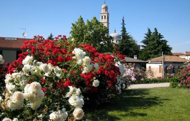 Roseraie de Saint Justine de Padoue