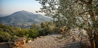 Andar per Vigne e Ulivi sulla Strada del Vino dei Colli Euganei