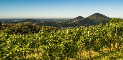 Eventi sulla Strada del Vino dei Colli Euganei