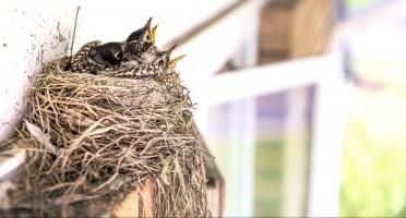 Mostra Ornitologica Città di Montegrotto Terme