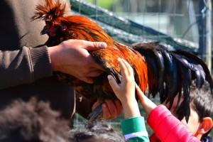 Fest des Huhns von Polverara